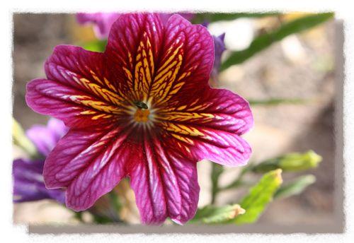 Navajo Flower