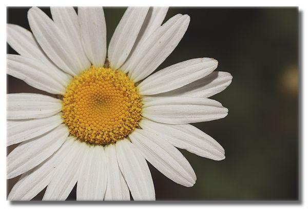 Wildflower ll sm
