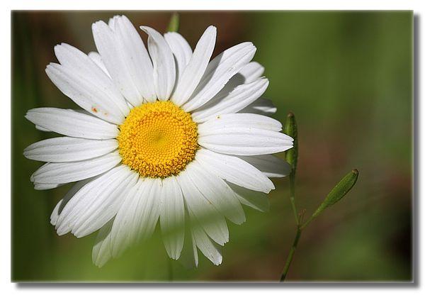 Wildflower sm