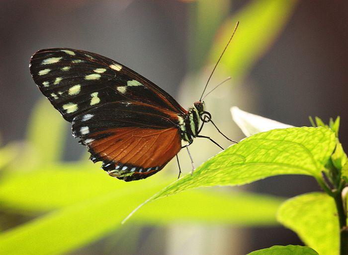 Butterfly 1 sm