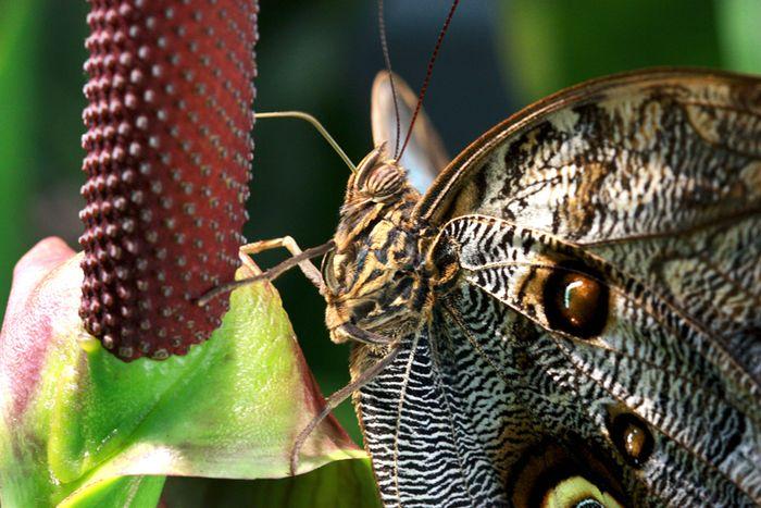 Butterfly 2 sm