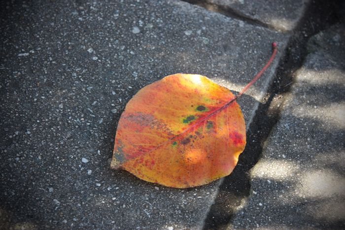 Leaf sm