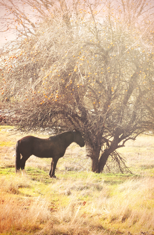 Lone Horse sm