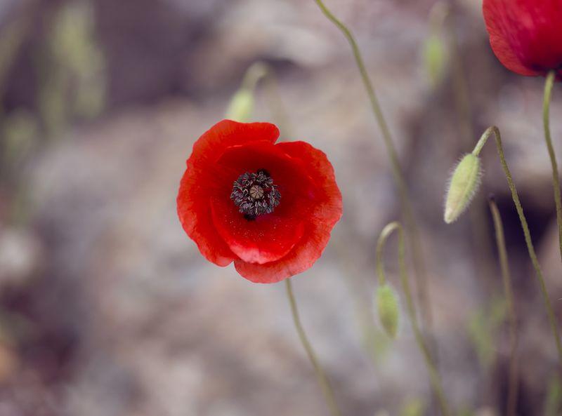 Flower 1 sm